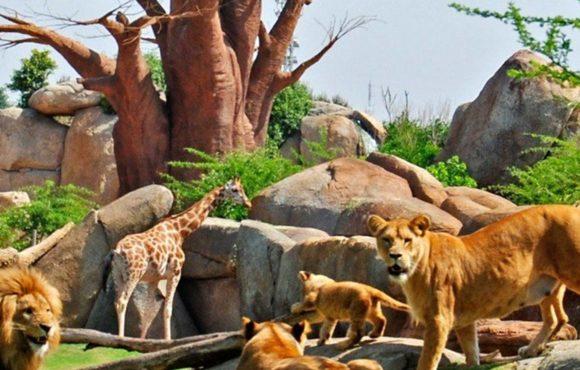 Le parc zoologique du XXIème siècle
