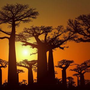 Madagascar, une destination touristique en développement