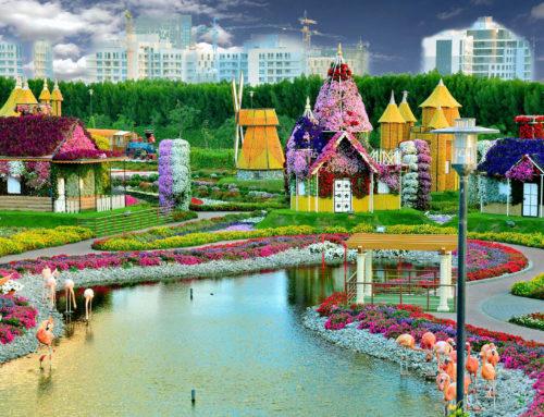 Le plus grand parc floral naturel du monde : Dubai Miracle Garden